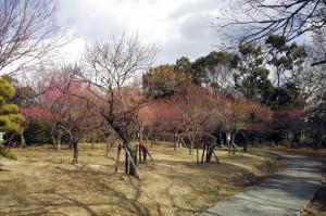 さいたま市大宮第2公園梅まつり