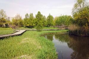 合併記念公園のカモ-さいたま市大宮区