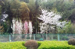 さいたま市-さぎ山公園
