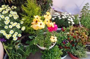 顧客宅の花-さいたま市中央区
