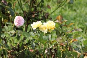 さいたま市西区、花の丘公園