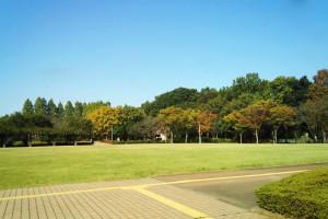 さぎやま公園の散歩-さいたま市緑区