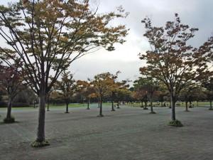 さいたま市大宮区の大和田公園、大宮第2公園、大宮第3公園、見沼代用水西岸を夕方、インラインスケートで滑りました。
