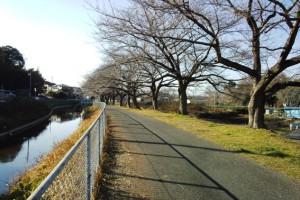 さいたま市緑区の見沼用水沿い